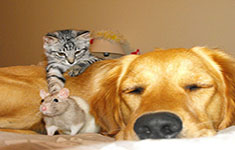 Dog, Cat, and Rat
