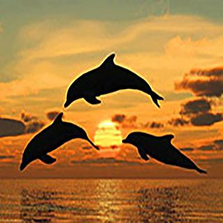 Miramar Beach Dolphins
