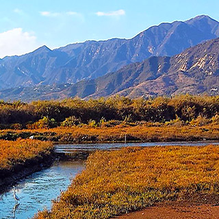 Carpinteria Wetlands
